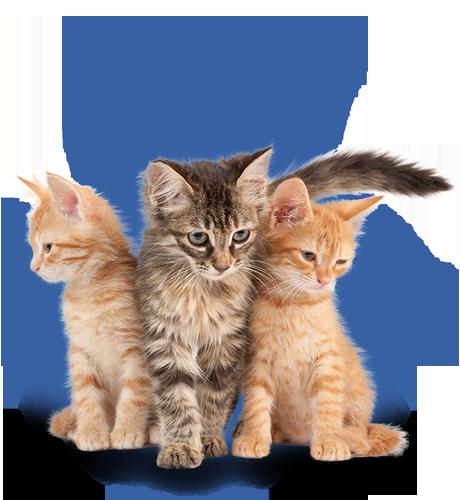 Koťata od 8 týdnů do 1 roku