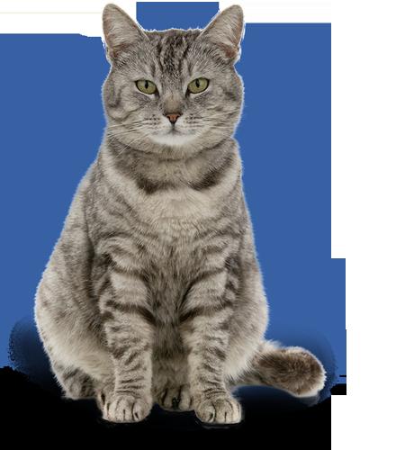 Kastrované kočky